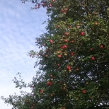 Sep 2014 Falkland Palace orchard