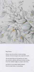 sbs-bog-cotton-jm