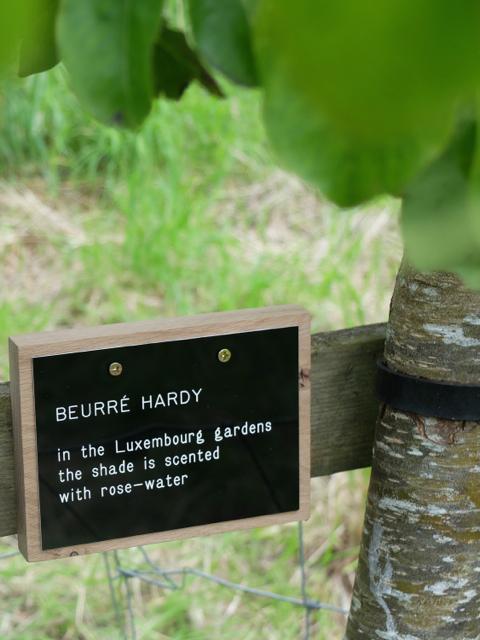 BEURRE HARDY 2