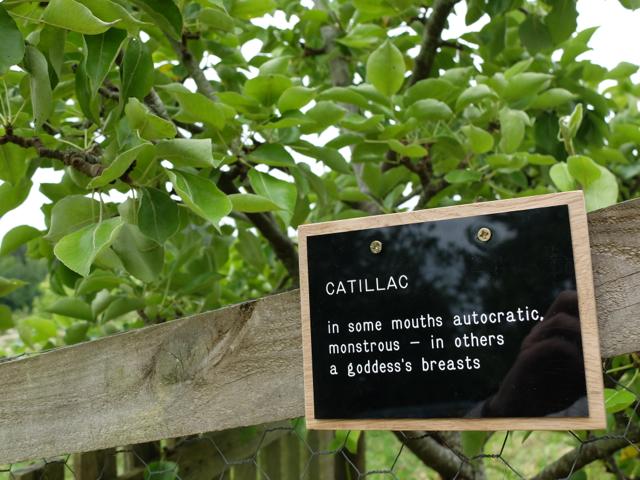 CATILLAC 2