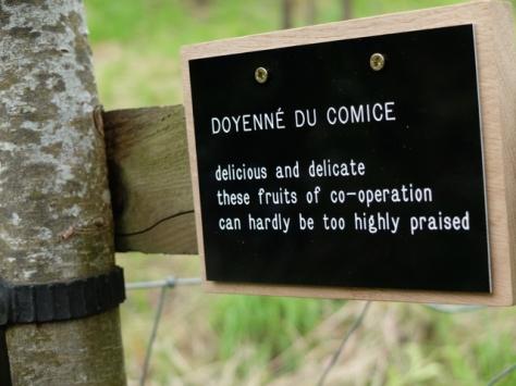DOYENNE DU COMICE 3