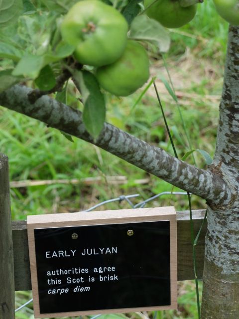 EARLY JULYAN 1