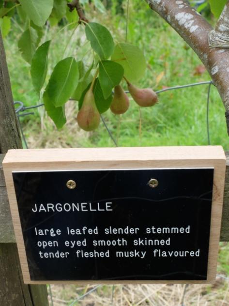 JARGONELLE 4